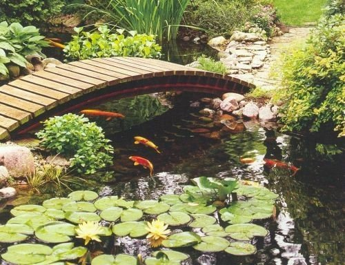 Fish pond ideas aqua tech for Fish pond decorations
